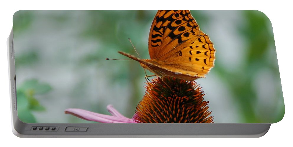 Butterfly Portable Battery Charger featuring the photograph Butterfly On Cornflower by Kathy McCabe