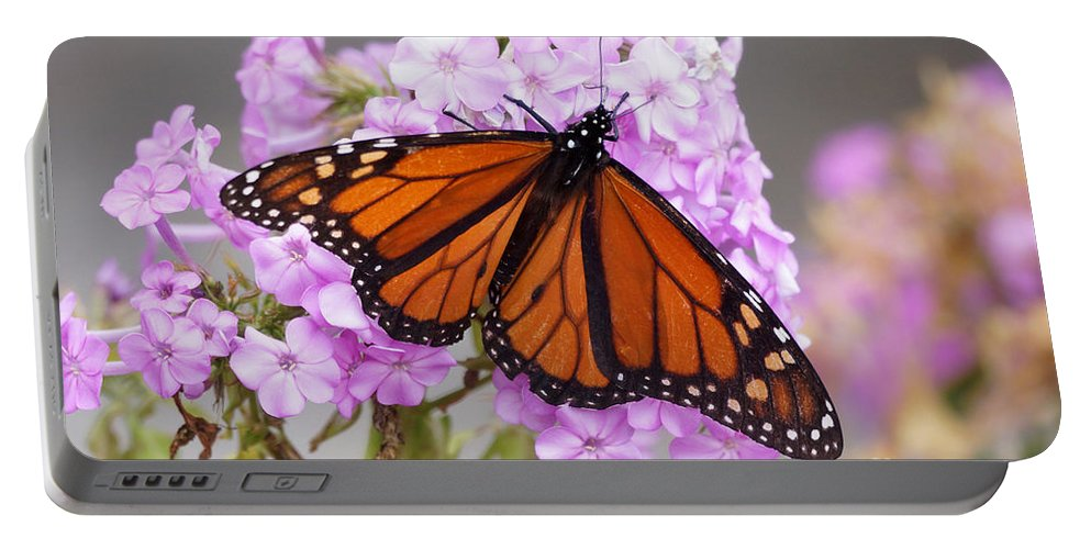 Butterfly Portable Battery Charger featuring the photograph Butterfly On Pink Phlox by Lori Tordsen