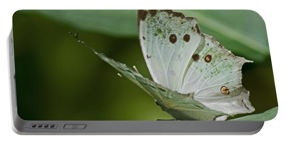 Sandra Clark Portable Battery Charger featuring the photograph Butterfly Ready For Take Off by Sandra Clark