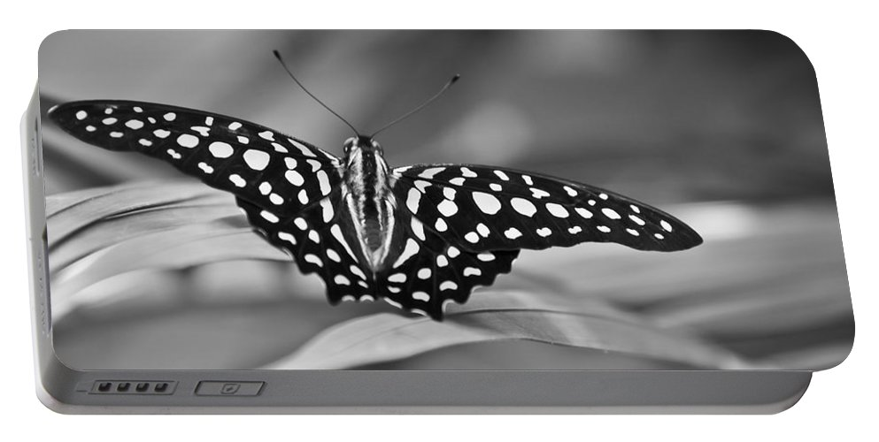 Butterfly Black & White Portable Battery Charger featuring the photograph Butterfly Resting by Ron White