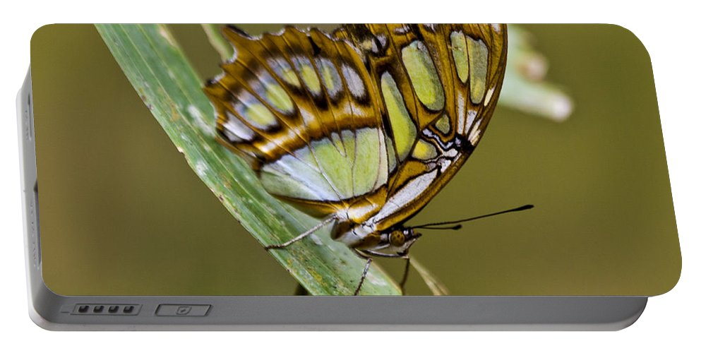 Butterfly Portable Battery Charger featuring the photograph Butterfly Siproeta Stelenes by Heiko Koehrer-Wagner