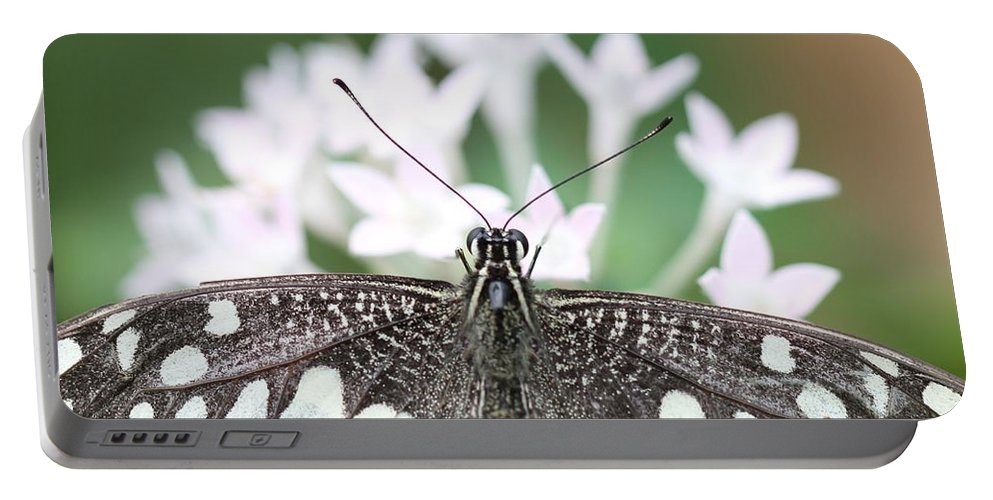 Butterfly Portable Battery Charger featuring the photograph Butterfly View by Ramabhadran Thirupattur