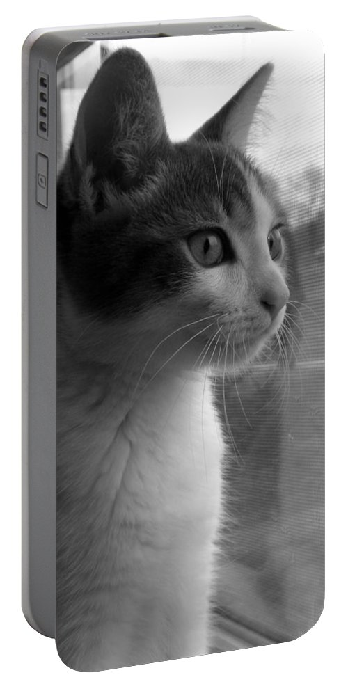 Animals Portable Battery Charger featuring the photograph Bw The Inquisitive Kitty Jackson by Thomas Woolworth