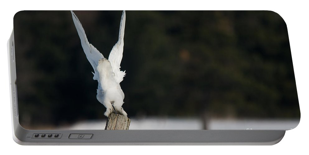 Snowy Owl Portable Battery Charger featuring the photograph Bye Bye Snowy by Cheryl Baxter