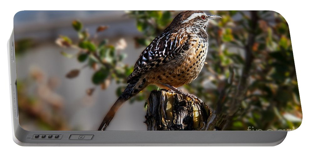 Bird Portable Battery Charger featuring the photograph Cactus Wren by Robert Bales