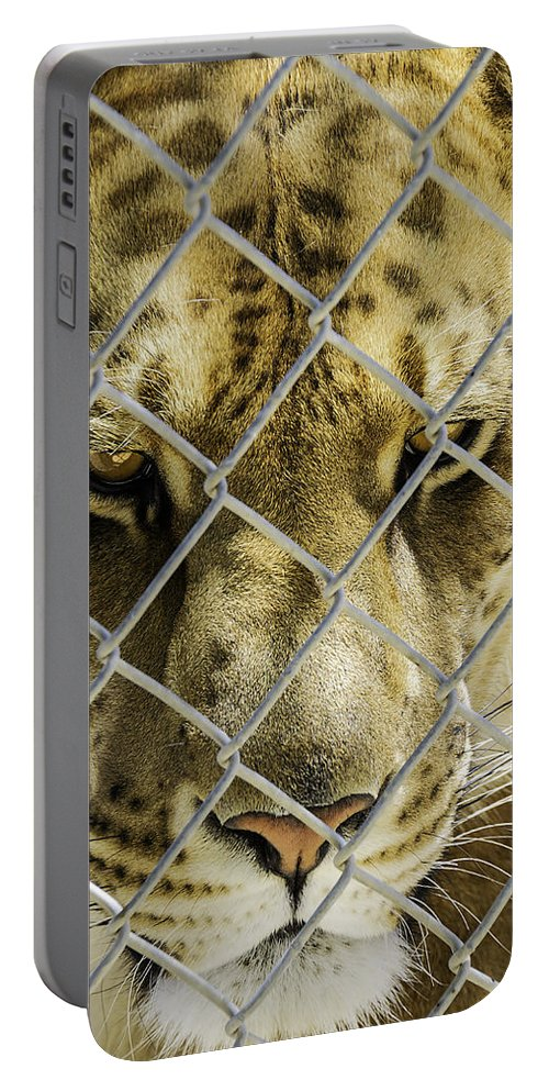 Liger Portable Battery Charger featuring the photograph Caged Liger by LeeAnn McLaneGoetz McLaneGoetzStudioLLCcom