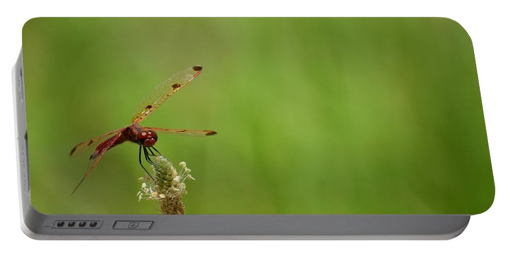 Calico Pennant Portable Battery Charger featuring the photograph Calico Pennant by Maria Urso