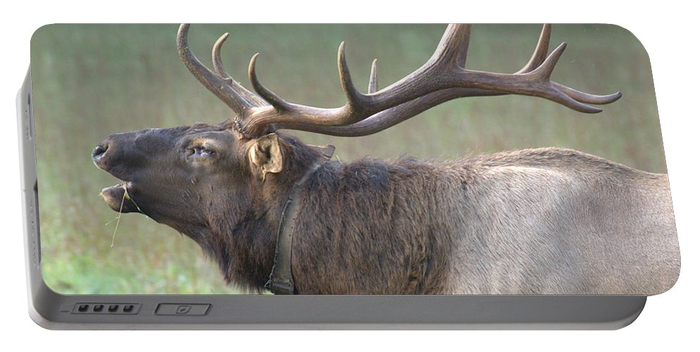 Elk Portable Battery Charger featuring the photograph Call Of The Wild by Mel Hensley