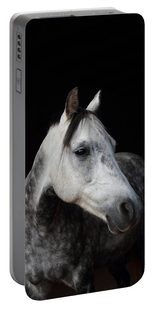 Horse Portable Battery Charger featuring the photograph Calypso by Jim Koniar