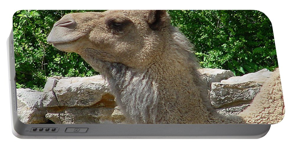 Camel Portable Battery Charger featuring the photograph Camel by Gary Gingrich Galleries