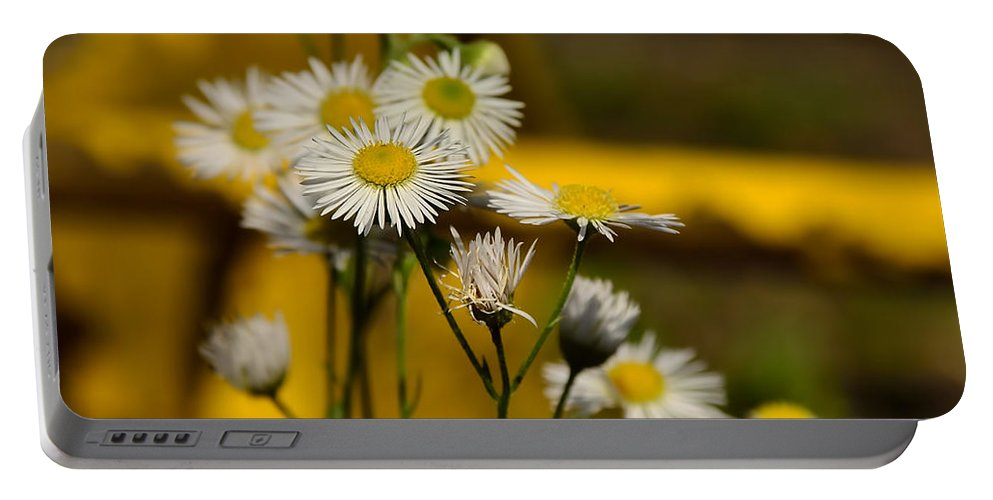 Background Portable Battery Charger featuring the photograph Camomille by TouTouke A Y