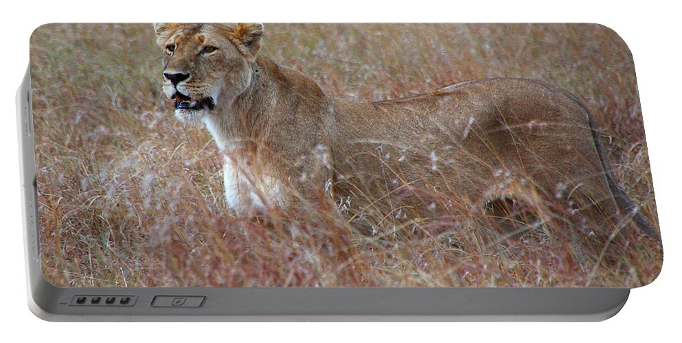 Lion Portable Battery Charger featuring the photograph Camouflaged Female Lion In Grass by Carole-Anne Fooks