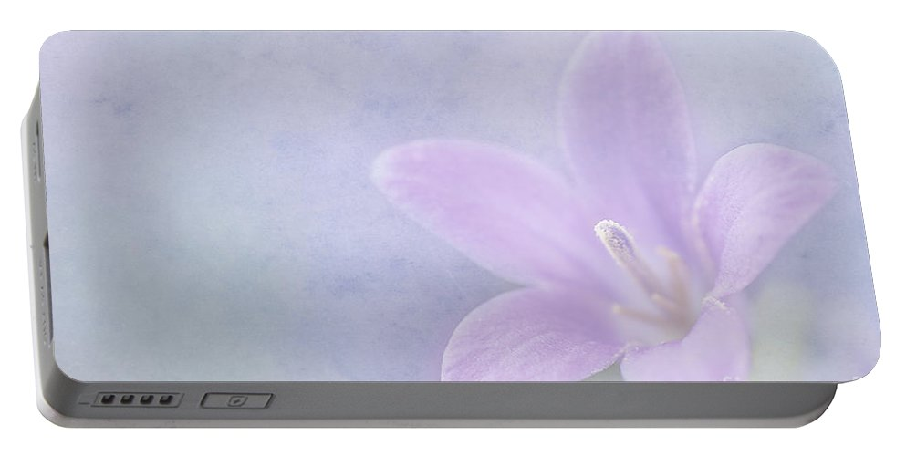 Wall Bellflower Portable Battery Charger featuring the photograph Campanula Portenschlagiana by John Edwards