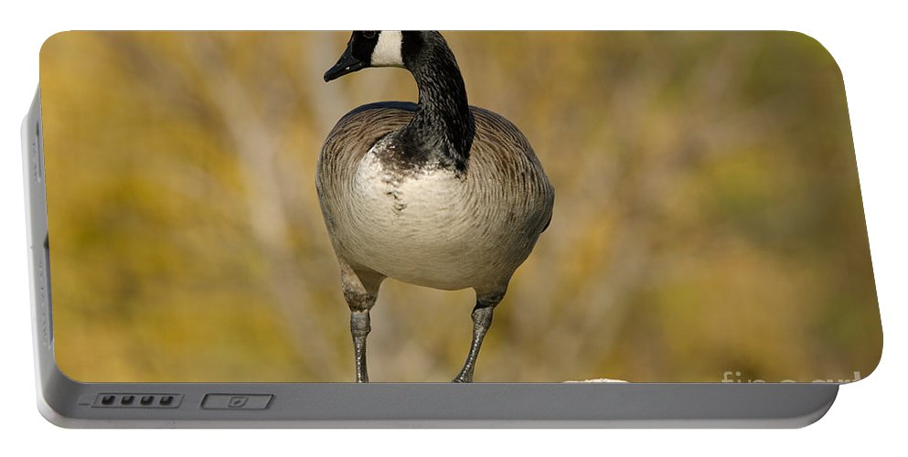 Canada Portable Battery Charger featuring the photograph Canada Goose by Les Palenik