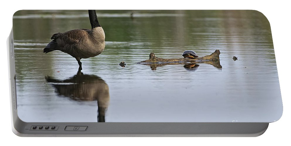 Canada Goose Portable Battery Charger featuring the photograph Canada Goose Pictures 172 by World Wildlife Photography