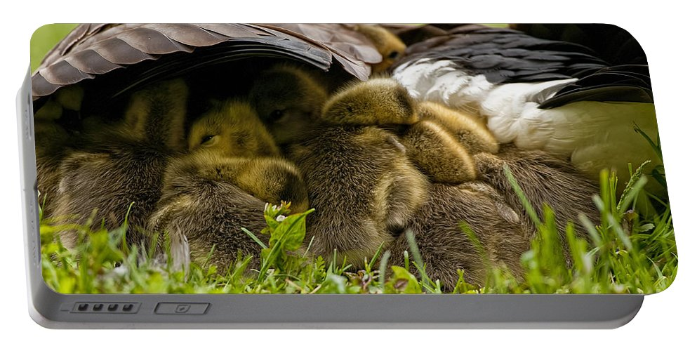 Canada Goose Portable Battery Charger featuring the photograph Canada Goose Pictures 189 by World Wildlife Photography