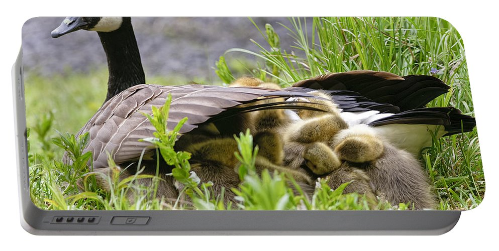 Canada Goose Portable Battery Charger featuring the photograph Canada Goose Pictures 192 by World Wildlife Photography