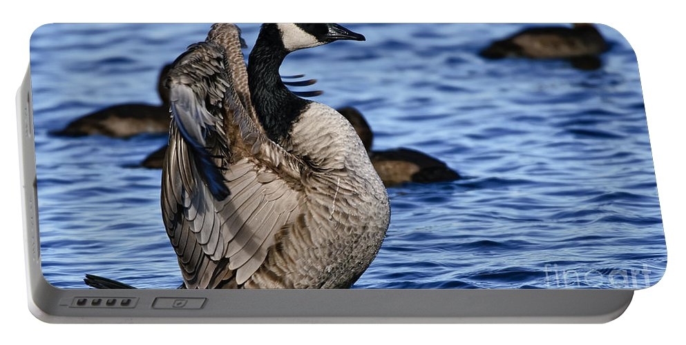 Canada Goose Portable Battery Charger featuring the photograph Canada Goose Pictures 84 by World Wildlife Photography
