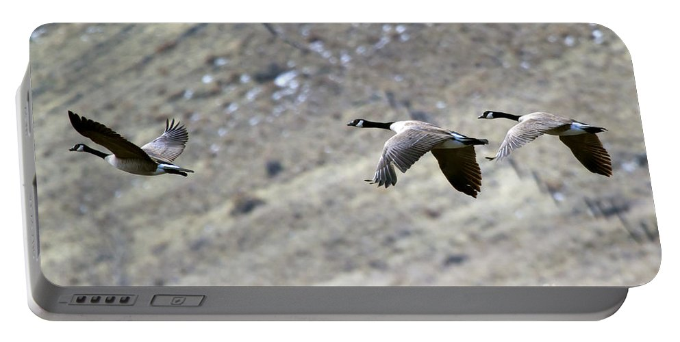 Geese Portable Battery Charger featuring the photograph Canadian Flight by Mike Dawson