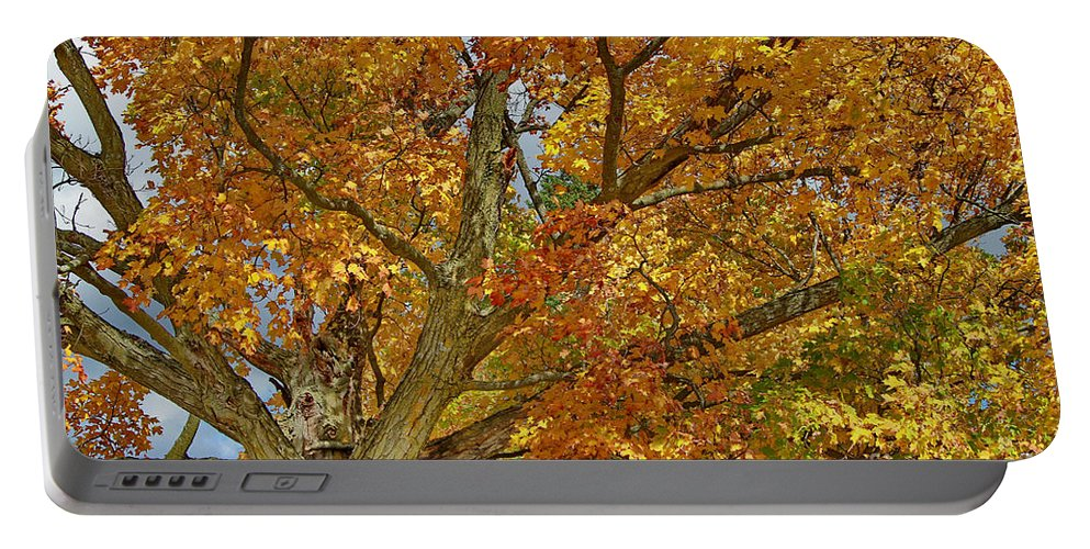 Tree Portable Battery Charger featuring the photograph Canadian Tree 2012 by Deborah Benoit