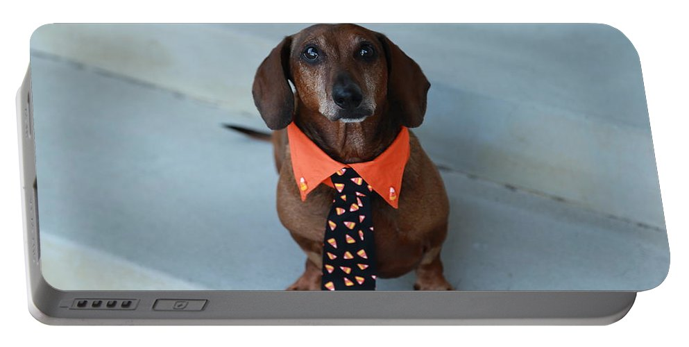 Dachshund Portraits Portable Battery Charger featuring the photograph Candy Corn Tie by Scott Hill