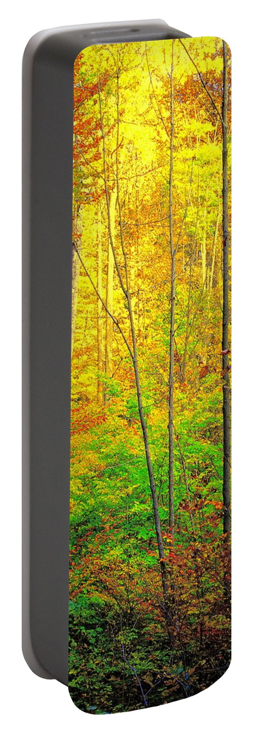 Canopy Portable Battery Charger featuring the photograph Canopy Of Color IIi by Frozen in Time Fine Art Photography
