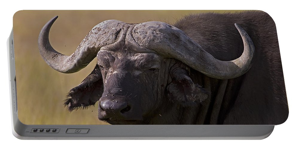 Syncercus Caffer Portable Battery Charger featuring the photograph Cape Buffalo  #0607 by J L Woody Wooden
