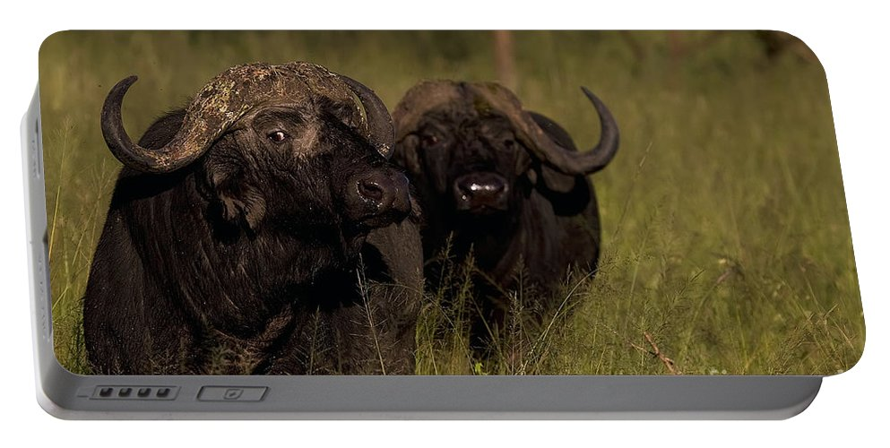 Syncercus Caffer Portable Battery Charger featuring the photograph Cape Buffalo  #6884 by J L Woody Wooden