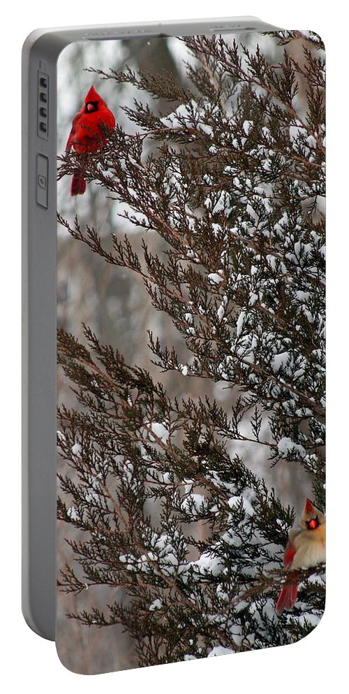 Winter Portable Battery Charger featuring the photograph Cardinal Couple In Evergreen by Karen Adams