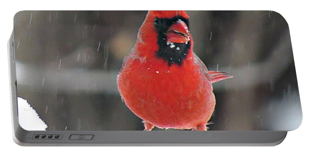 Male Cardinal Portable Battery Charger featuring the photograph Cardinal In Snowstorm by MTBobbins Photography