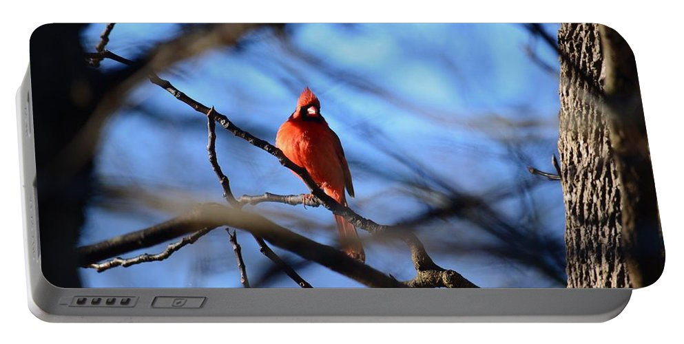 Cardinal In The Midst Portable Battery Charger featuring the photograph Cardinal In The Midst by Maria Urso
