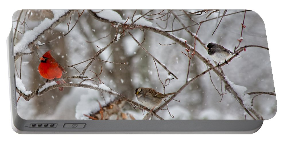 Red Portable Battery Charger featuring the photograph Cardinal Meeting In The Snow by Betsy Knapp