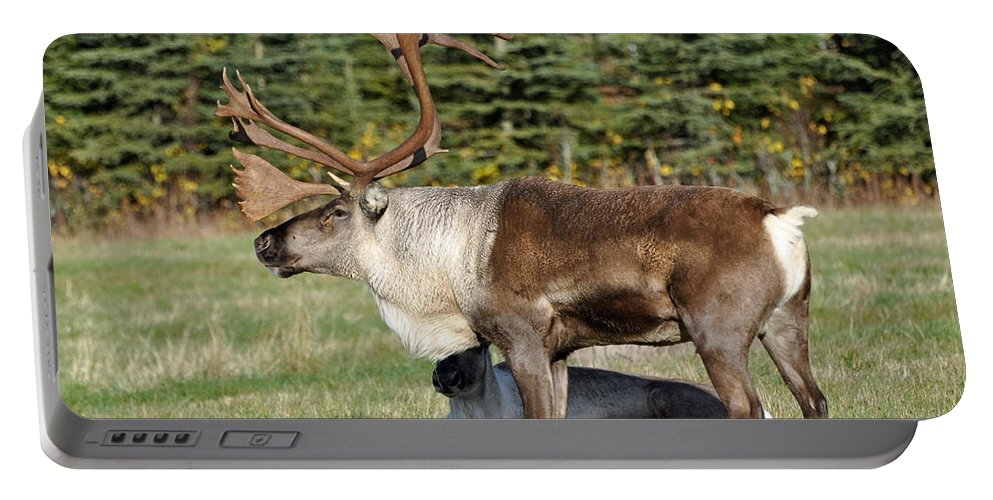 Alaska Portable Battery Charger featuring the photograph Caribou by Clint Pickarsky