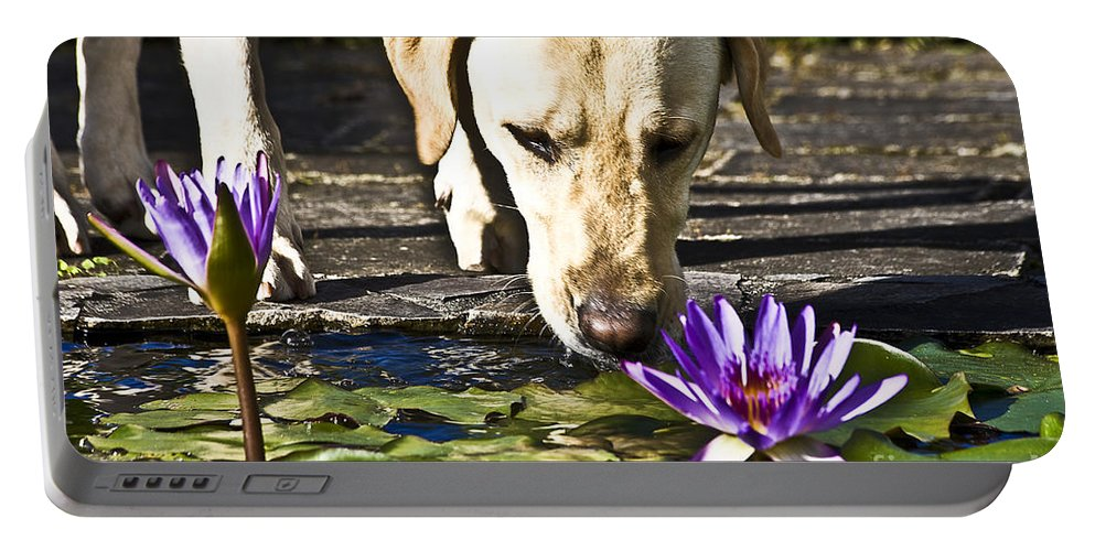 Heiko Portable Battery Charger featuring the photograph Carla's Dog by Heiko Koehrer-Wagner
