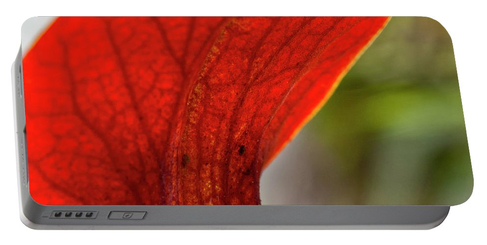 Heiko Portable Battery Charger featuring the photograph Carnivorous Plants 2 by Heiko Koehrer-Wagner