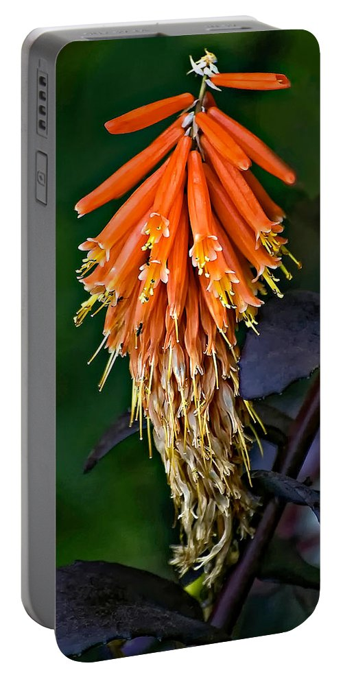 Flower Portable Battery Charger featuring the photograph Casual Attire by Steve Harrington