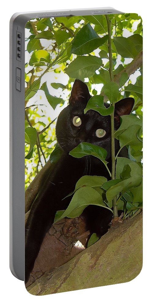 Cat Portable Battery Charger featuring the photograph Cat In Tree by Jenny Setchell