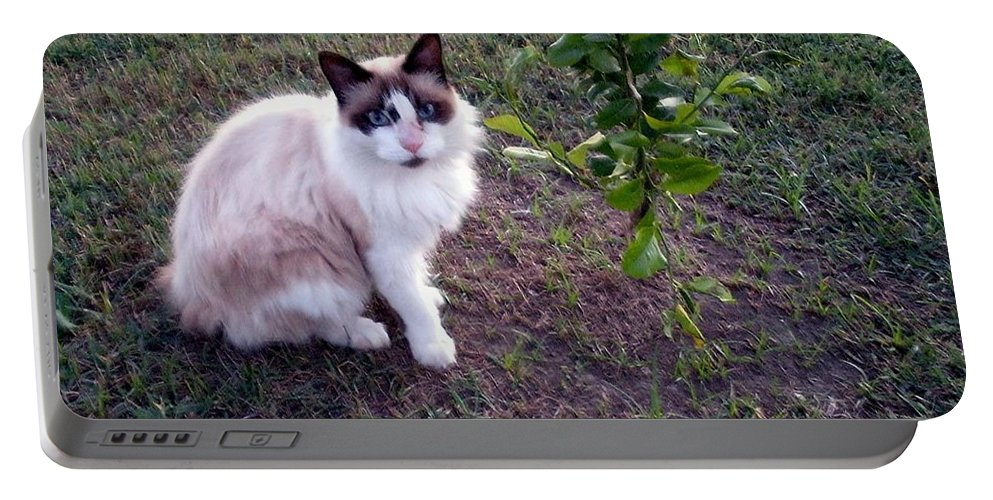 Burmese Portable Battery Charger featuring the photograph Cat 'n Orange Tree by Joseph Baril