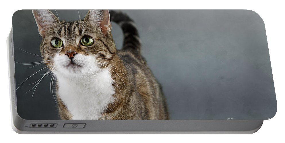 Cat Portable Battery Charger featuring the photograph Cat Portrait by Nailia Schwarz