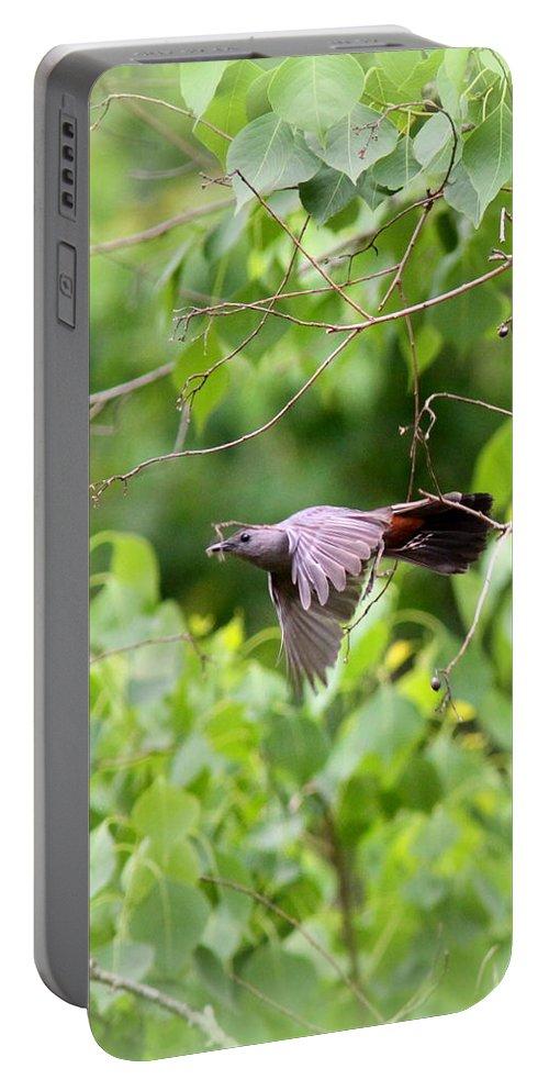 Catbird Portable Battery Charger featuring the photograph Catbird by Travis Truelove
