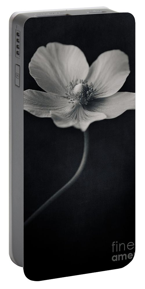 Anemone Portable Battery Charger featuring the photograph Catch The Light by Priska Wettstein