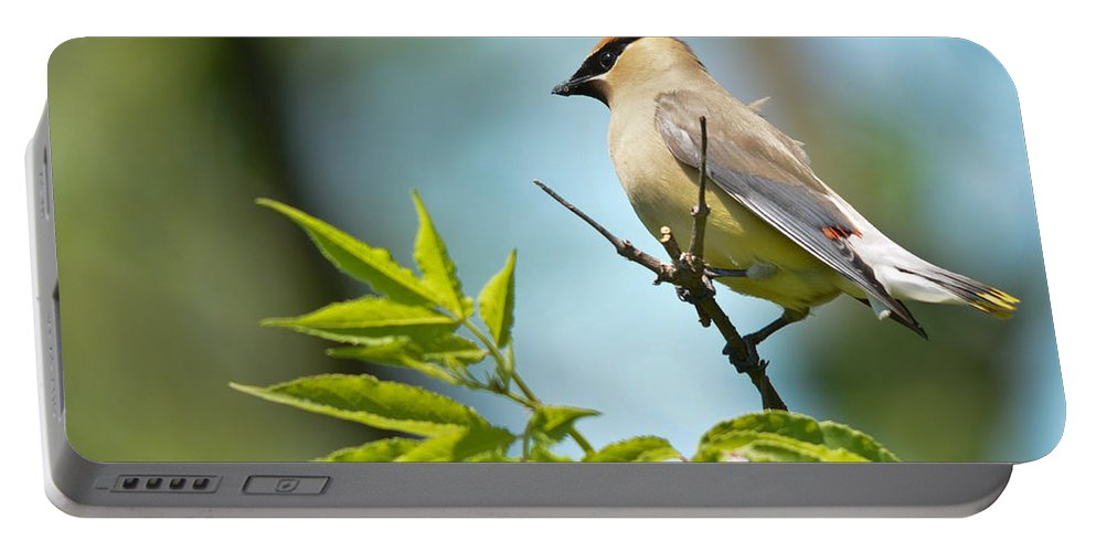 Cedar Waxwing Portable Battery Charger featuring the photograph Catching The Wind by Cheryl Baxter