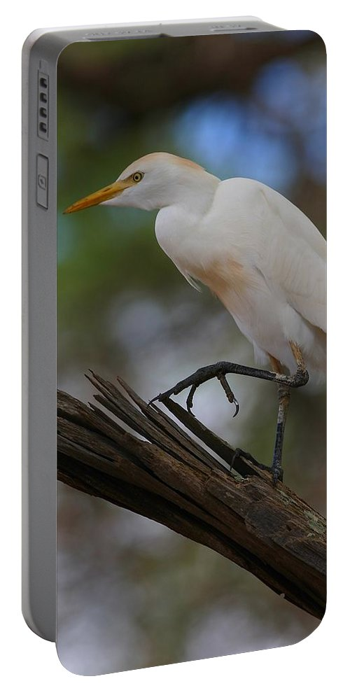 Cattle Egret Portable Battery Charger featuring the photograph Cattle Egret by Charles Owens