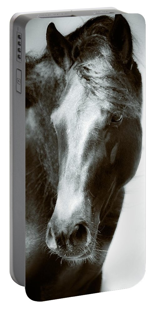 Horse Portable Battery Charger featuring the photograph Cautious Curiosity by Tracey Beer