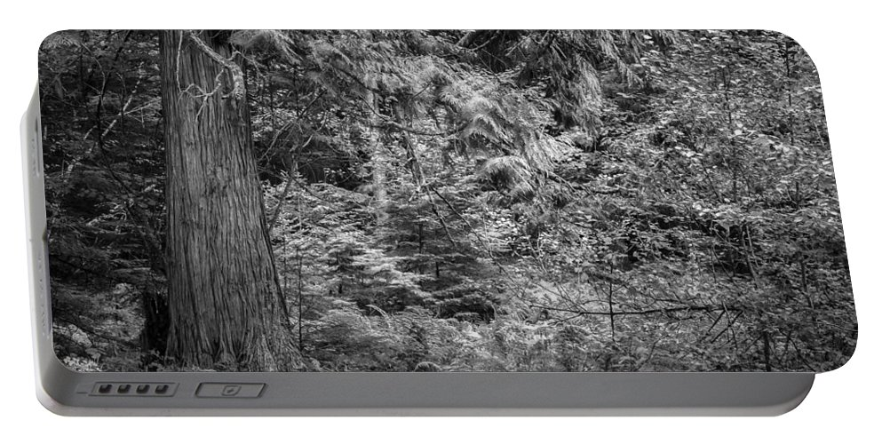 Glacier National Park Portable Battery Charger featuring the photograph Cedar Along The Trail Of Cedars Glacier National Park Bw by Rich Franco