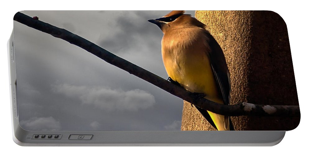 Cedar Waxwing Portable Battery Charger featuring the photograph Cedar Waxwing by Bob Orsillo