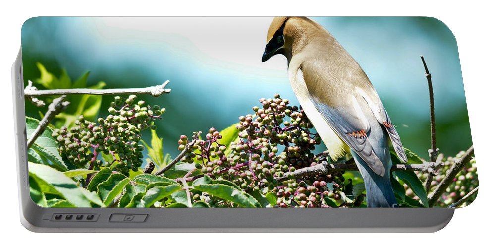 Cedar Waxwing Portable Battery Charger featuring the photograph Cedar Waxwing Pose by Cheryl Baxter