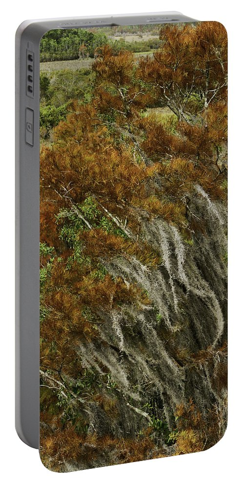 Swamp Portable Battery Charger featuring the photograph Cedars In The Fall by James Ekstrom