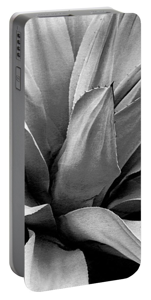 Century Plant Portable Battery Charger featuring the photograph Century Plant I V by Jim Smith