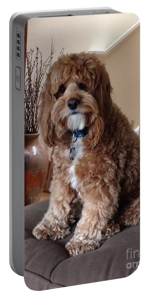 Charley Portable Battery Charger featuring the photograph Charley At Home by Christy Gendalia